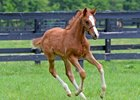 Groupie Doll's First Foal's Homecoming