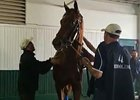KY Derby: Dortmund Saddled in Tunnel