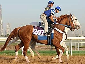 Curlin Takes on the World in Dubai