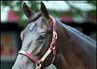 September Sire Power: Young and Old Rule at Keeneland