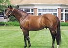 Influential Sire Kingmambo Euthanized