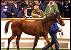 Full Sister to Galileo Brings $1.6 million