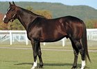 Leading NY Sire Catienus Back to KY