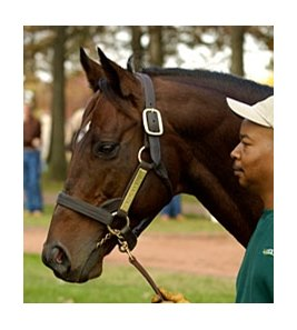 Standout Stallion Kingmambo Pensioned Bloodhorse