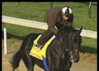A Cool Day at Churchill; Two Derby Contenders Work