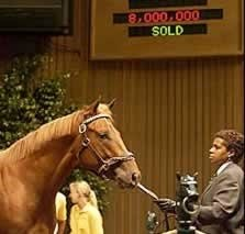Baffert Confirms Sekiguchi's Ownership of $8-Million Colt