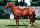 Woodman Euthanized at Age 24
