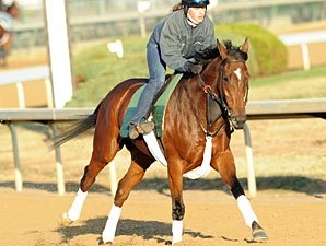 Proviso Strong in Gallop Out at Churchill