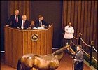 Aptitude Colt Sells for $350,000 at Fasig-Tipton