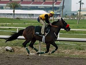 Lava Man to Skip Record Gold Cup Attempt