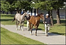 Outlook Bright for Fasig-Tipton July Yearling Auction