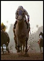 Steve Haskin's Derby Watch -- Week 4 (2/12/2002)