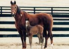 Top Broodmare Amelia Bearhart Dead