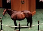 Hatta Diamond Brings $170,000 at F-T Sale