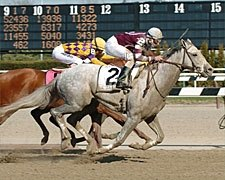 Tapit Retired to Stud at Gainesway Farm