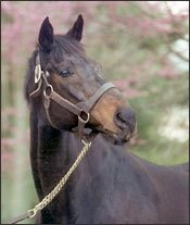 Champion and Major Sire Pleasant Colony Dead