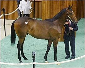 F-T Saratoga Up All Around; $1.2M Storm Cat Colt Tops Final Session