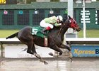 Oregon Champion Euthanized