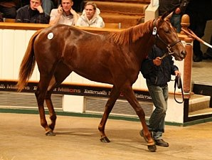 Galileo Filly Sells for 1.7 Million Guineas