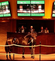 Barretts Yearling Sale Off to Strong Start