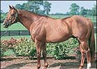 Walmac Stallion Miswaki Pensioned