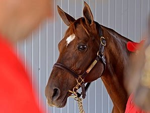Champion Flanders Euthanized