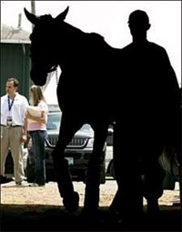 Derby Winner Arrives at Pimlico