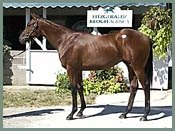 Hennessy Colt Sells for $1.1 Million at Keeneland