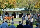 Keeneland Fall Meet Bucks National Trends