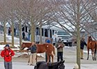 Keeneland January Sale Kicks Off 2012