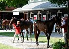 Saratoga Sizzlers One: Horses to Watch