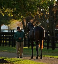 F-T Fall Yearling Sale Keeps on Truckin'