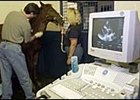 Vet, Cardiologist Look at Foal's Heart