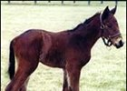 Charismatic's First Foal