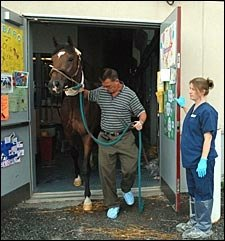 Barbaro Gets New Bandages; Radiographs 'Look Great'