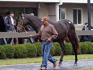 F-T Ky. Fall Yearling Sale Rebounds