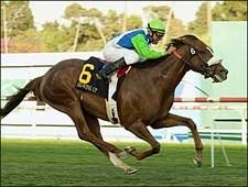 Showing Up Good as Billed in Hollywood Derby