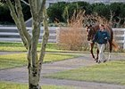 Business Declines at Keeneland Sale