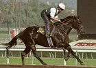 Classic Winner Sarava's First Winner