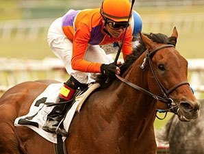 Crown of Thorns Retired from Racing