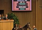 Leon Picks Up Street Cry Colt for $925,000