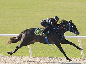 Macho Uno Colt Brings $250,000 at OBS