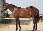 Even the Score Colt Tops Texas Sale
