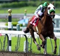 Point Given Romps in Santa Anita Derby