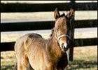 One of Slew's Final Foals