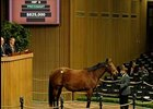 'Diva' Brings $825,000 at Keeneland