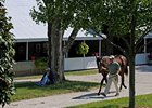 Keeneland: Book 6 Figures Tumble