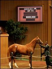 Shadwell Goes to $800,000 for Son of Mr. Greeley