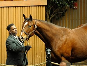 Storm Cat Mare Brings $300,000 at Keeneland