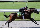 Songandaprayer Colt Shines at Keeneland